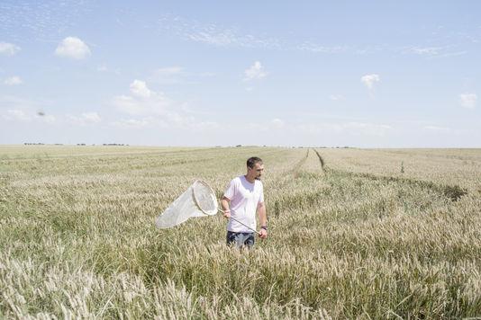 Agriculture : et si on produisait plus avec moins de pesticides etd'engrais