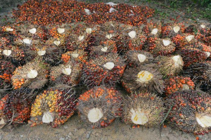 Près de la moitié de l'huile de palme consommée en Europe se trouve… dans lediesel