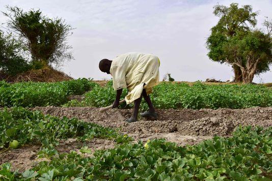 «Climat: l'agriculture fait partie de la solution»