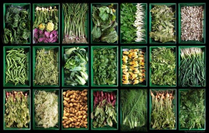 Une étude scientifique conclut aux effets bénéfiques globaux de l'agriculturebiologique